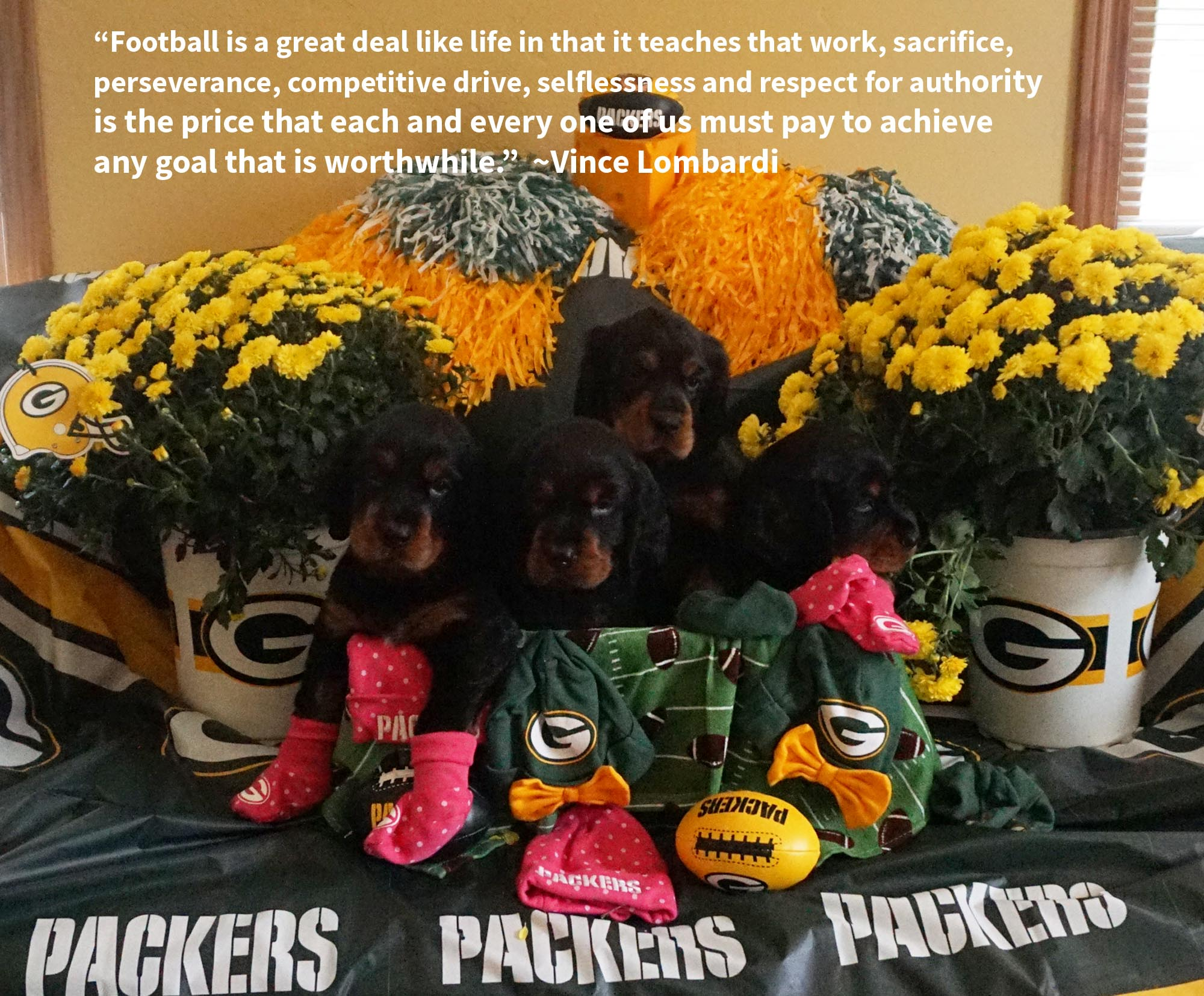 packerpups-week6-staged-copy